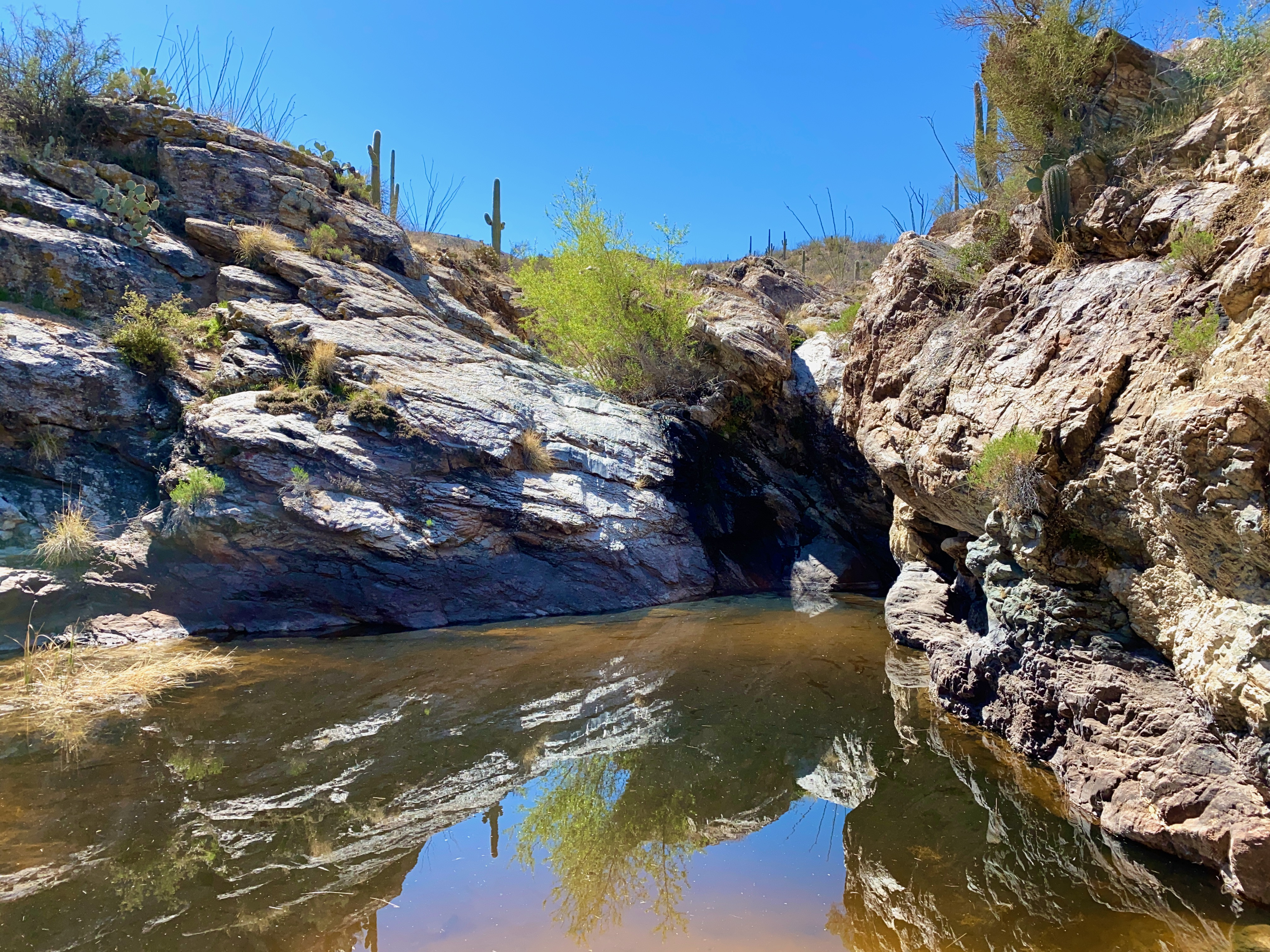 water hole on Wildhorse Trail in Saguaro National Park